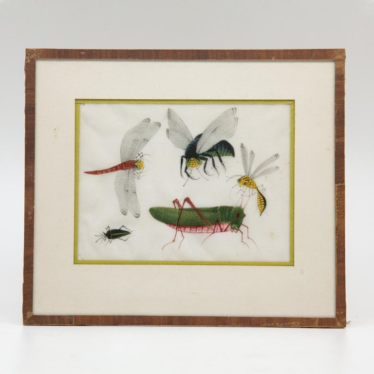 Late 19th Century Chinese Paintings of Insects on Rice Paper For Sale 5