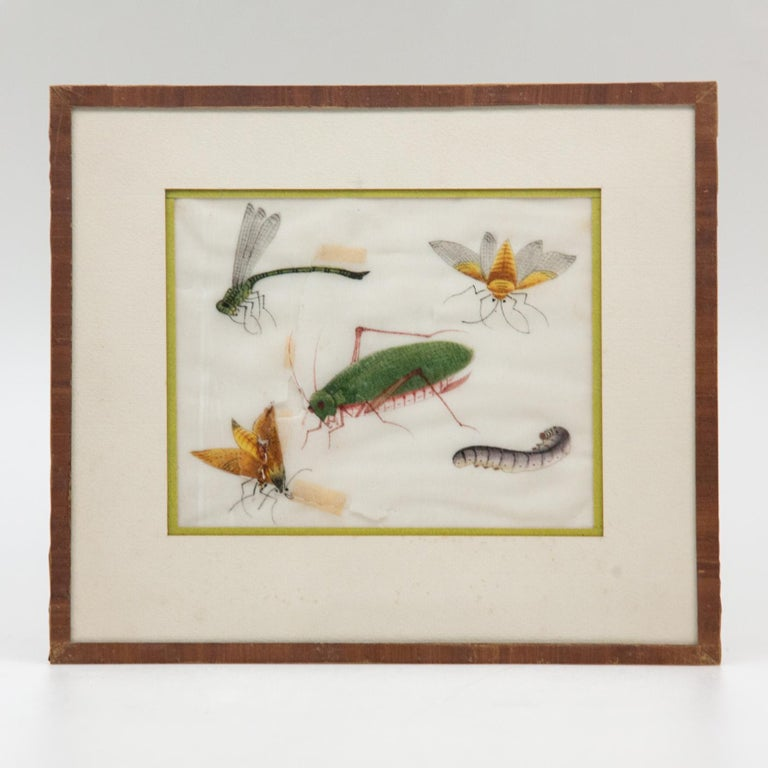 Late 19th Century Chinese Paintings of Insects on Rice Paper For Sale 6