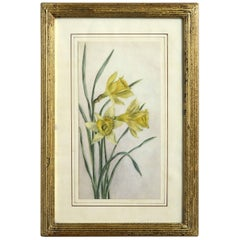 Late 19th Century 19th Century Watercolor Study of Dafffodils