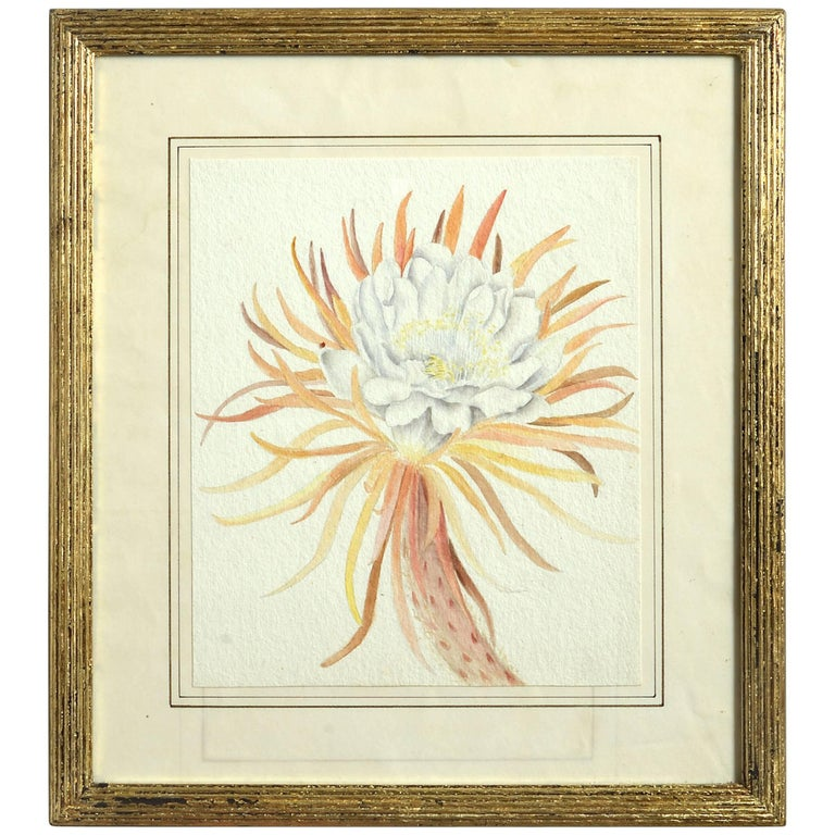 Late 19th Century Botanical Watercolor For Sale