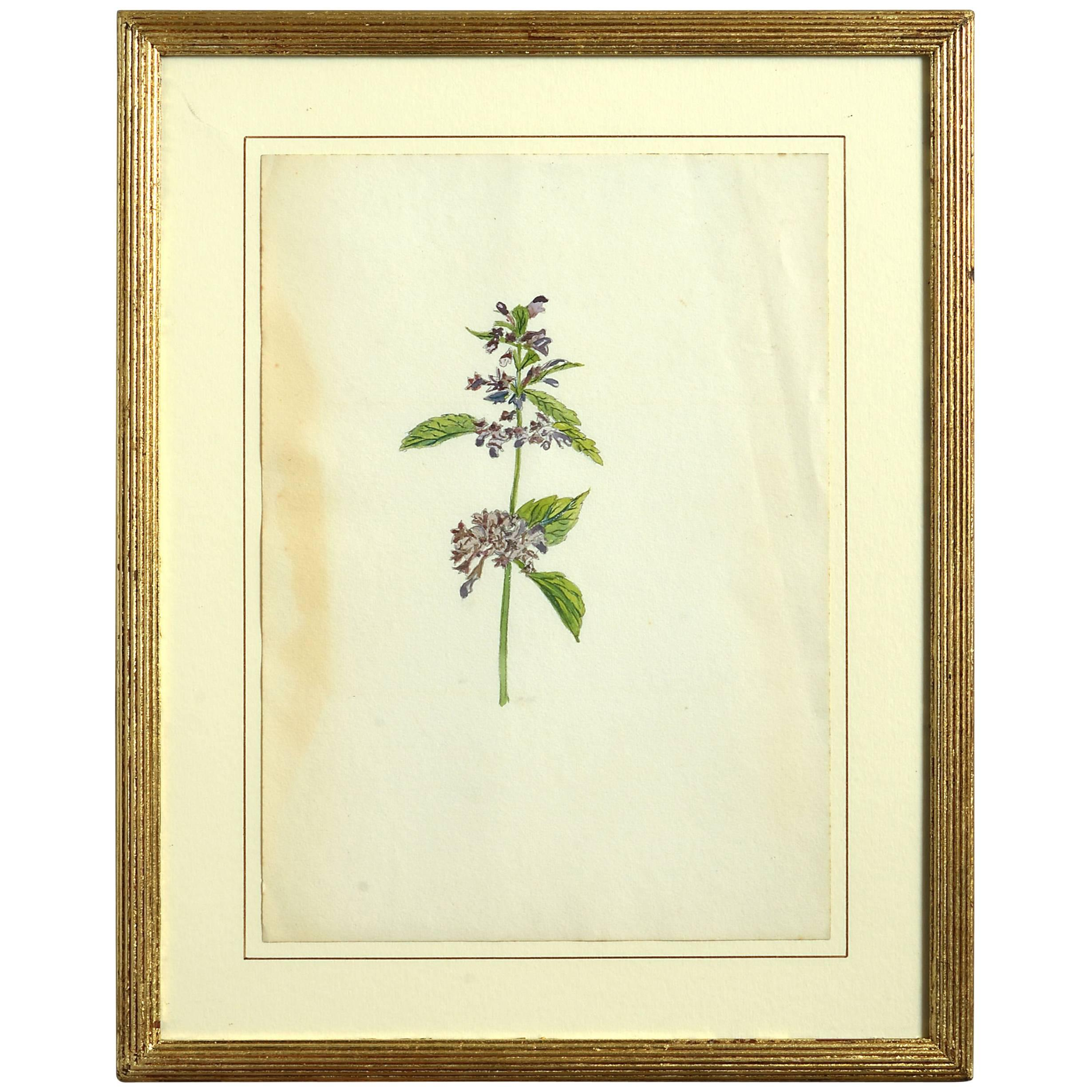 Late 19th Century Botanical Watercolor