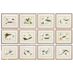 Late 19th Century Chinese Paintings of Insects on Rice Paper