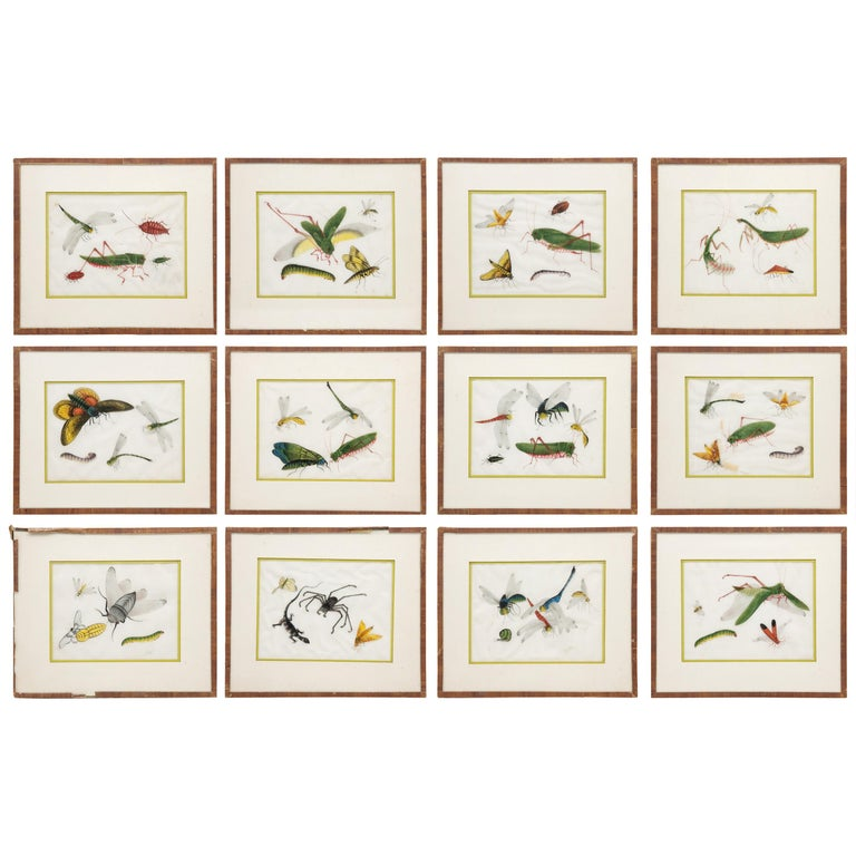 Late 19th Century Chinese Paintings of Insects on Rice Paper For Sale