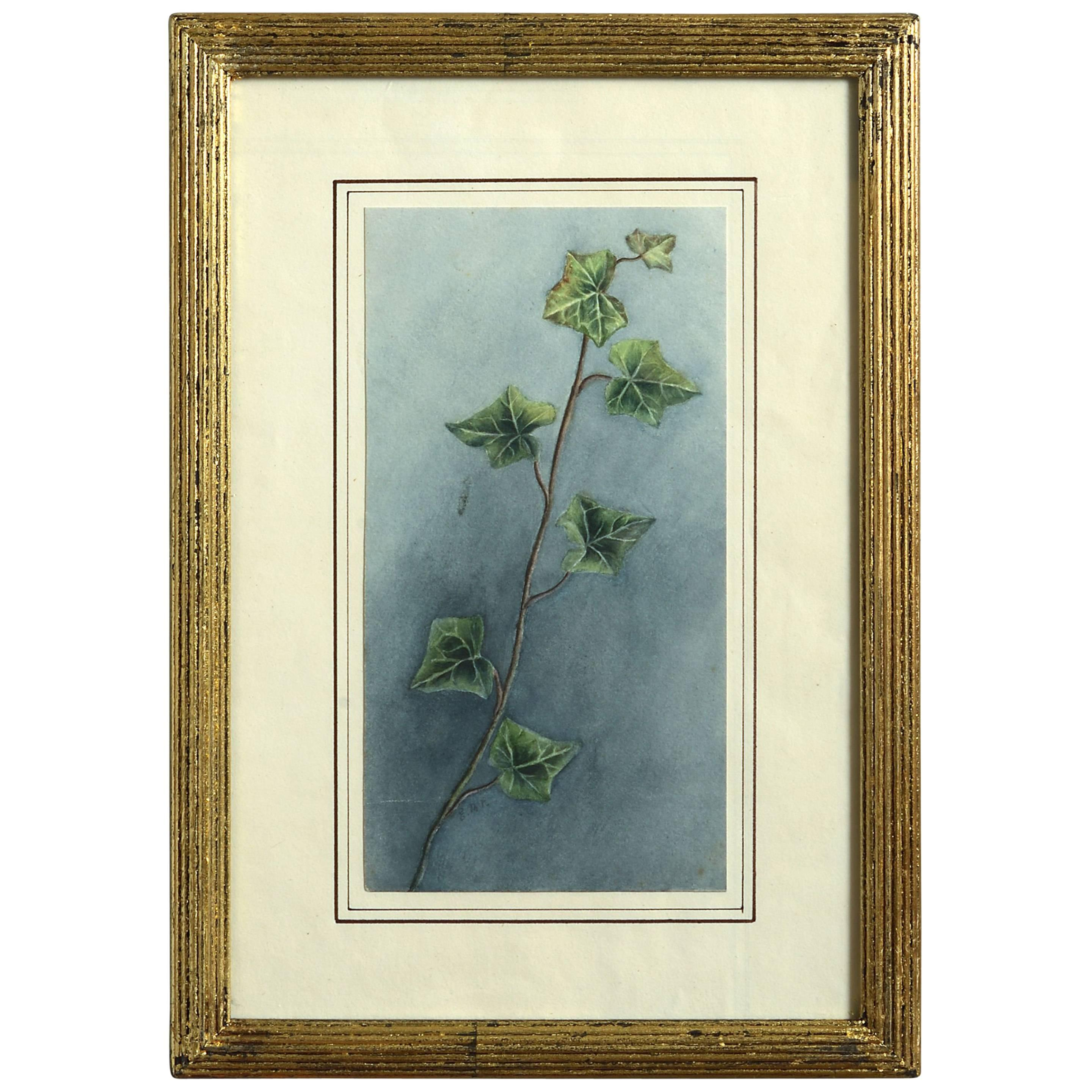 Late 19th Century Watercolor Study of Ivy