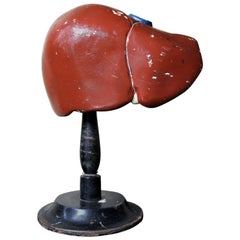 Late 19th Century German Anatomical Model of a Liver on Stand, circa 1890