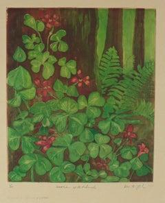 """Sorrel at the Redwoods, Mendocino Forest Floor"" 1980 Etching"