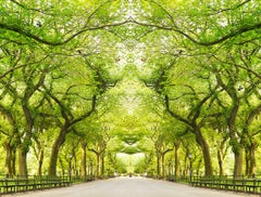 Trees III, NY