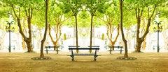 Trees IV, St Tropez- un-framed archival pigment print