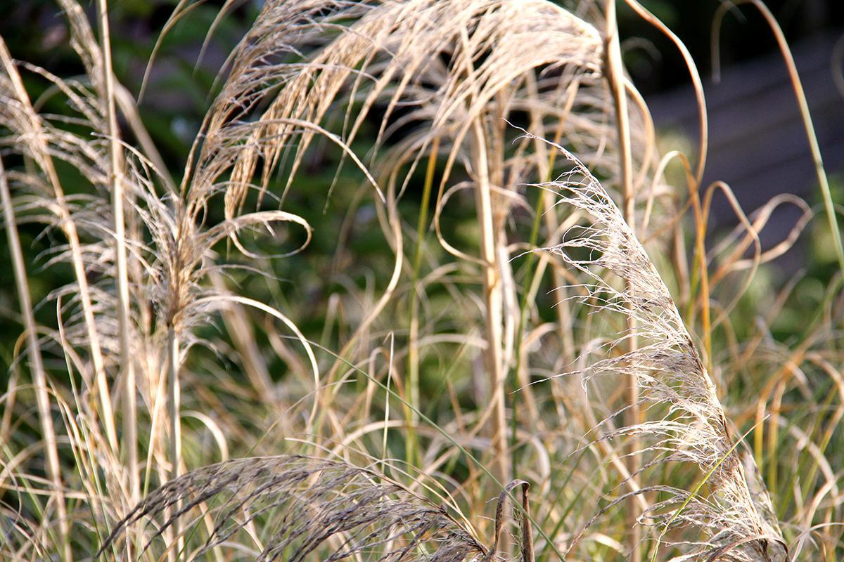 Weeds 9