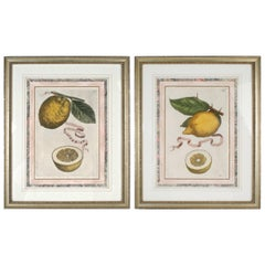 Lemon Botanical Engravings Attributed to Fiovanni Battista Ferrari, c1646