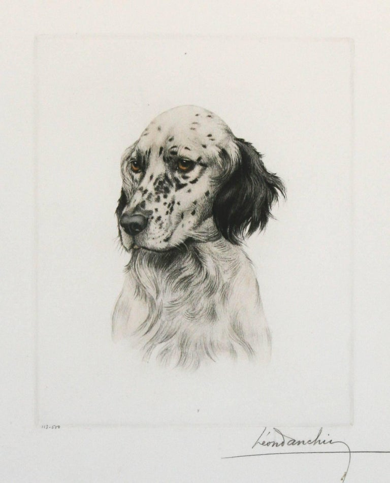 Little Setter Head Leon Danchin original etching