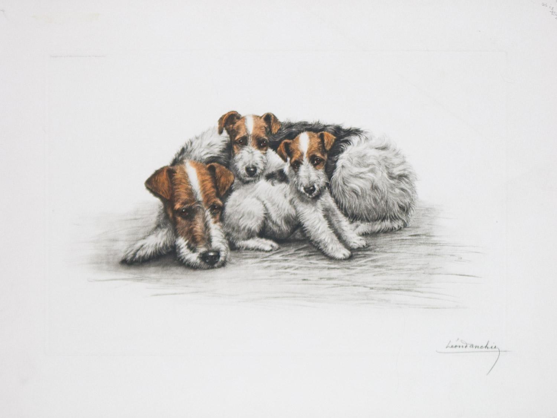 Two Fox Terriers original Etching by Leon Danchin