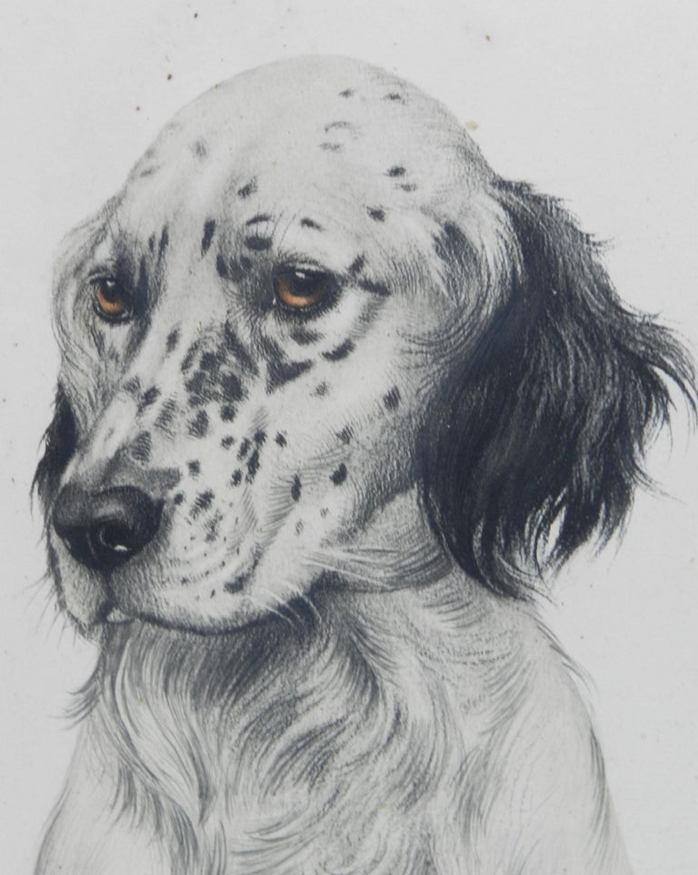 Vintage Handcolored Engaving Portrait of a Setter signed by Leon Danchin For Sale 1