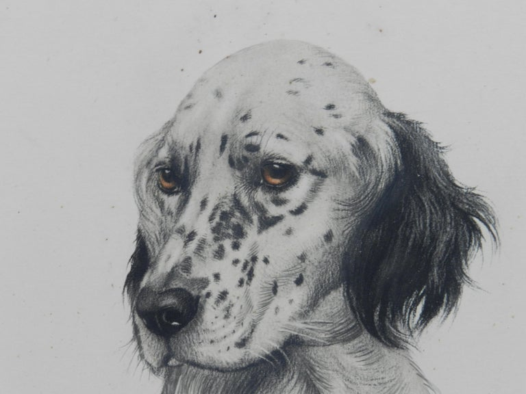 Vintage Handcolored Engaving Portrait of a Setter signed by Leon Danchin For Sale 5