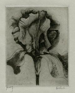 Iris ( 1 )