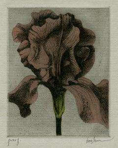 Iris (3)