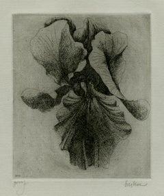Iris (4)