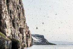 Birdcliffs no.1, Alkerfjellet, documentary landscape photograph