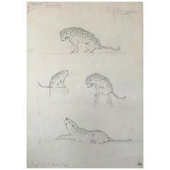 Leopard Drawing, Guido Righetti, 1919
