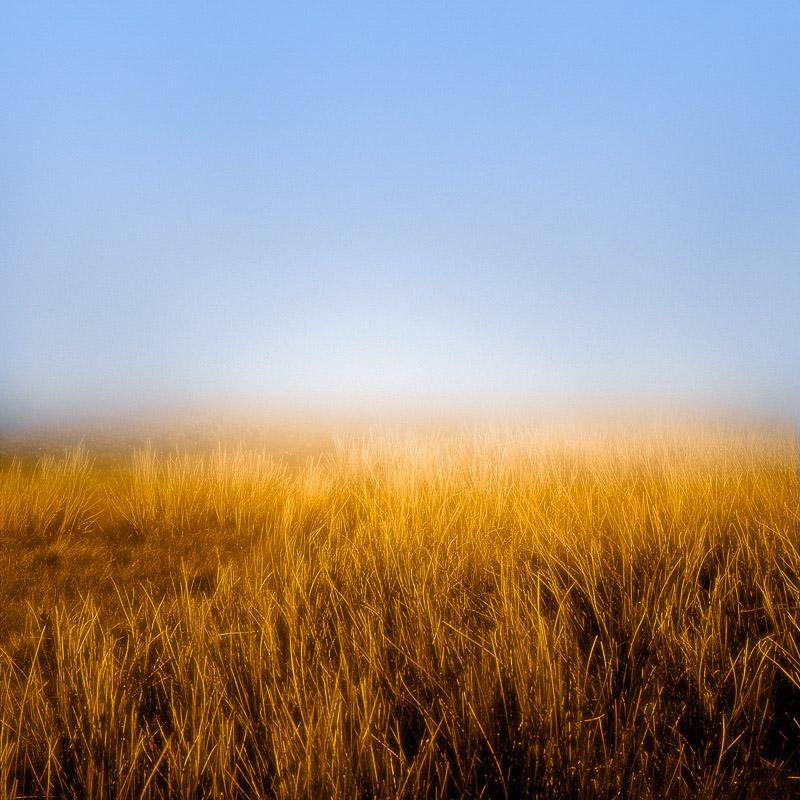Horizon Fields 5 (Minimal Landscape Photo of Blue Skies and Golden Wheat Field)