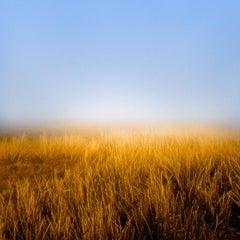 Horizon Fields 5 (Minimal Landscape Photo of Blue Skies and Golden Wheat Field)