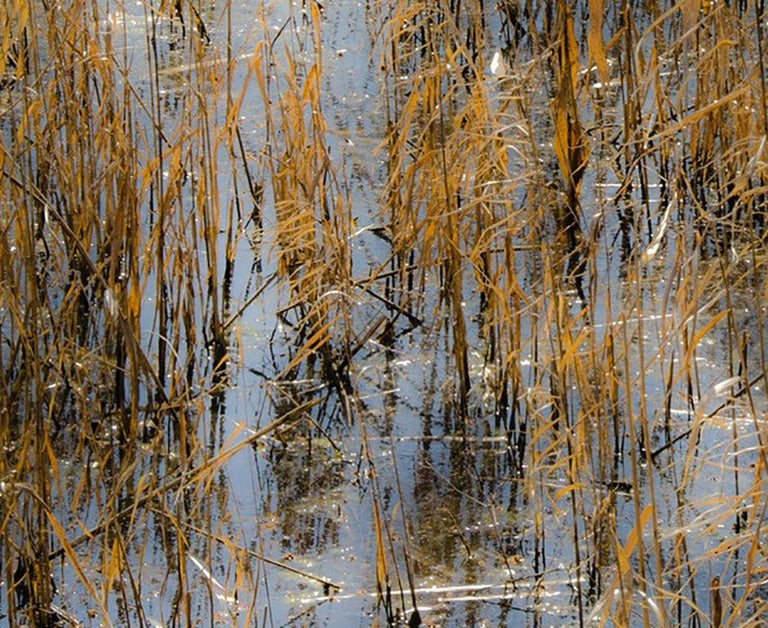 Horizon Fields LXIV (Abstract Vertical Landscape Photo of Golden Reeds in Water) - Photograph by Lependorf and Shire