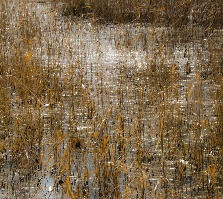 Horizon Fields LXIV (Abstract Vertical Landscape Photo of Golden Reeds in Water) - Contemporary Photograph by Lependorf and Shire