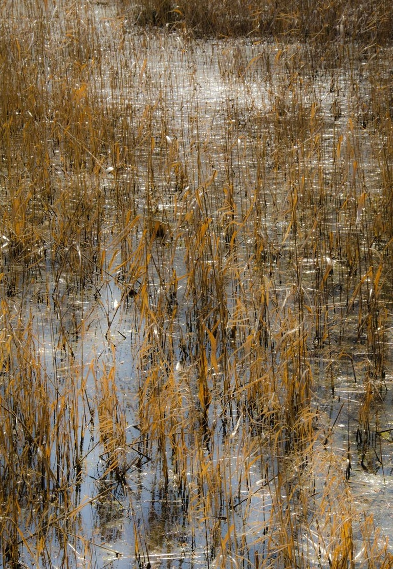 Lependorf and Shire Landscape Photograph - Horizon Fields LXIV (Abstract Vertical Landscape Photo of Golden Reeds in Water)