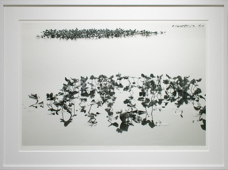 Shirokuro XXVII (Black and White Abstracted Landscape with Lily Pads) - Photograph by Lependorf and Shire