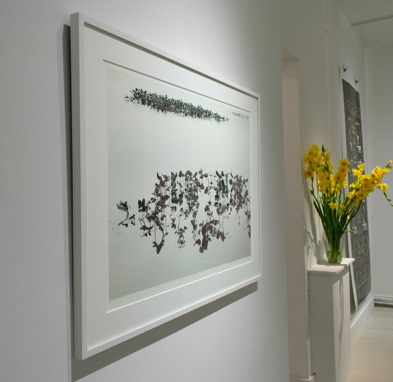 Shirokuro XXVII (Black and White Abstracted Landscape with Lily Pads) - Contemporary Photograph by Lependorf and Shire