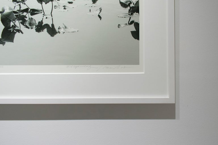 Shirokuro XXVII (Black and White Abstracted Landscape with Lily Pads) - Gray Black and White Photograph by Lependorf and Shire
