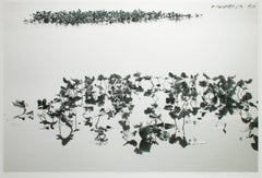 Shirokuro XXVII (Black and White Abstracted Landscape with Lily Pads)