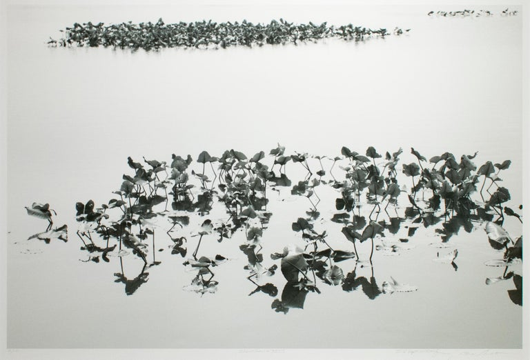 Lependorf and Shire Black and White Photograph - Shirokuro XXVII (Black and White Abstracted Landscape with Lily Pads)