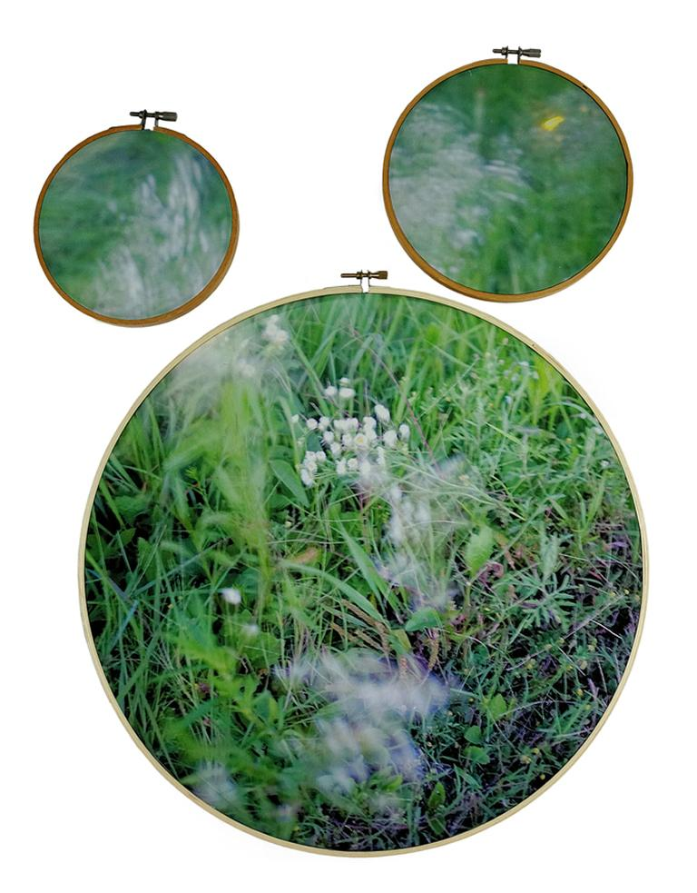 Letitia Huckaby Figurative Photograph - Southern Song - 3-part grass & flower landscape on fabric in embroidery hoops