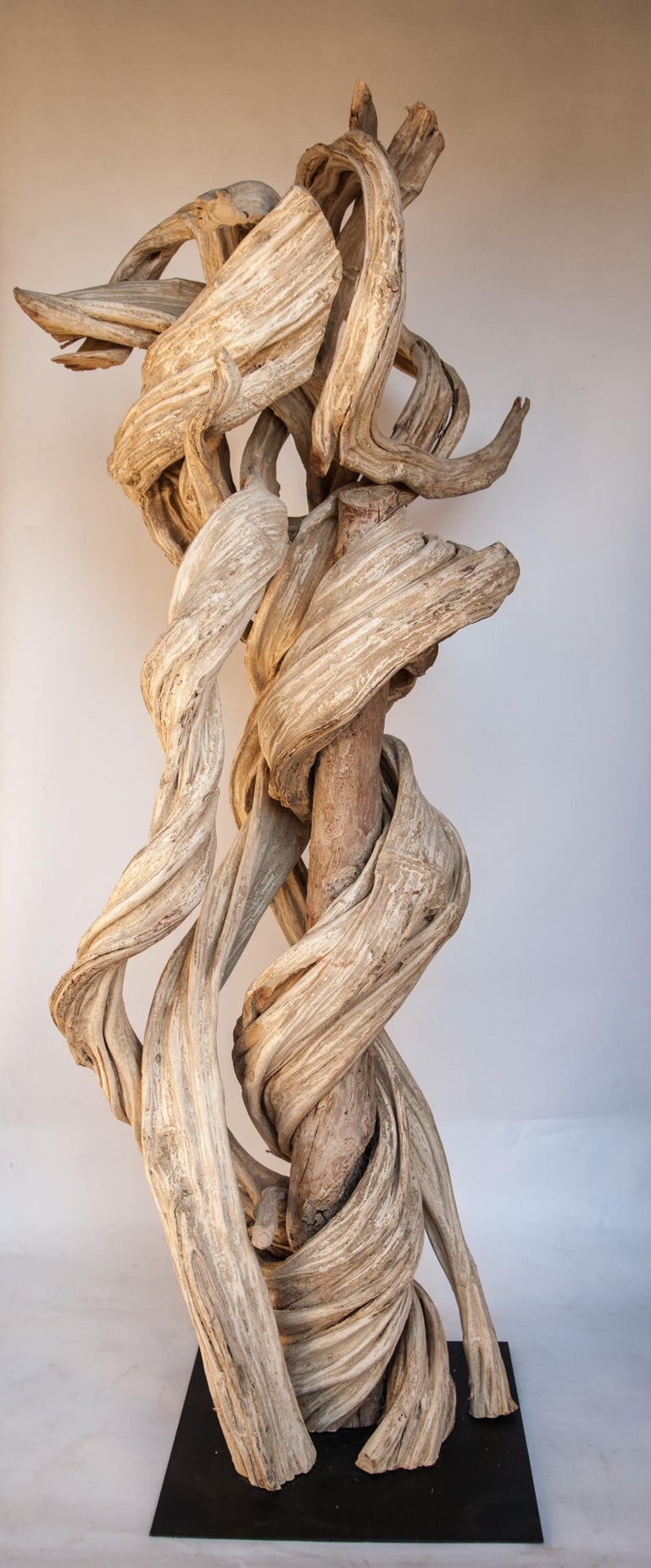 Liana Vine sculpture on a metal stand. 76 inches tall from Thailand. Offered by Bruce Hughes. This fabulously intertwined liana vine was gathered from the forests of eastern Thailand, selected for its beautiful form. It was cleaned and bleached