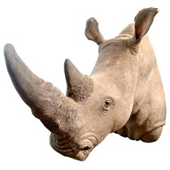Life-Size Rhino Mount Replica