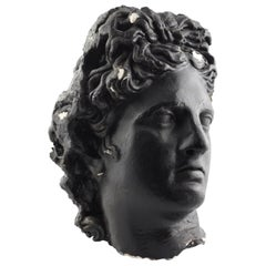 Life-Sized Grand Tour Style Plaster Head of Apollo Belvedere
