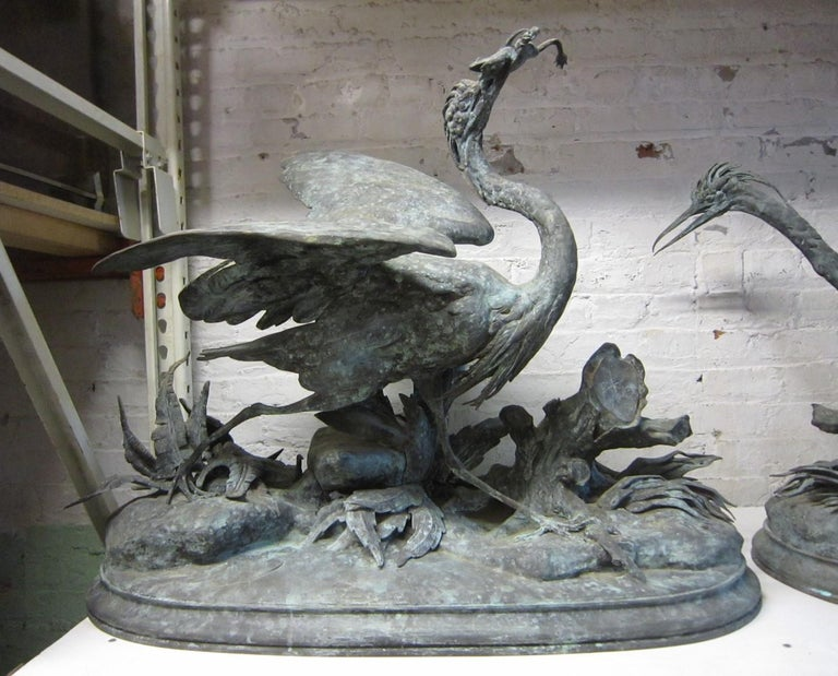 This important and unusual pair of life size French 19th century Blue Herons are realistically depicted with the two birds foraging in their natural environment. One large Heron is holding a frog in its mouth, while the other with wings flared and