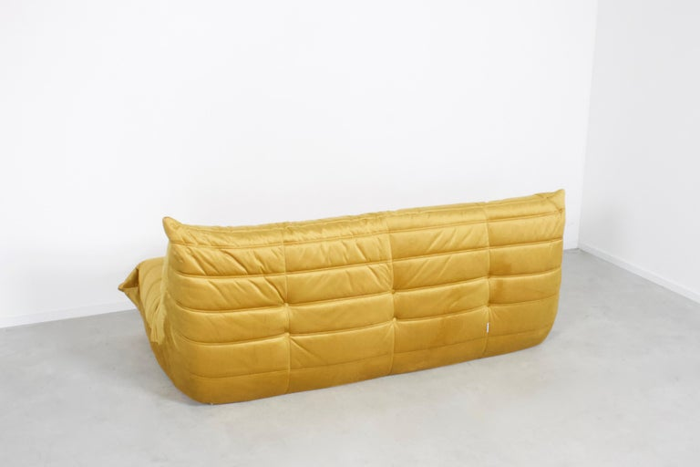 Togo three-seat by Michel Duraroy for Ligne Roset in excellent condition.   Two sofas available  Reupholstered in a high quality gold colored velours which gives a beautiful and rich effect.  The Togo features an ergonomic design with multiple