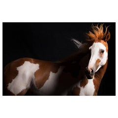 """""""Lili,"""" Plexiglass Mounted Horse Color Photograph by Lisa Houlgrave"""