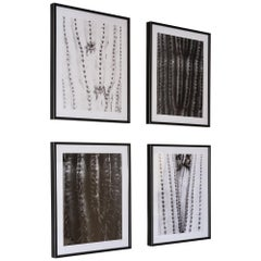 Limited Edition Prints from Desert Bellows, A Saguaro Series by Andrew Johnson