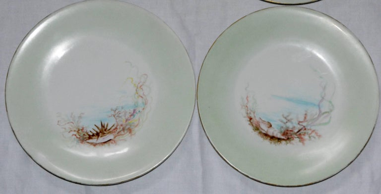 Art Nouveau Limoges T & V French Plates with Seashell Paintings by M.H. Dismukes in 1898 For Sale
