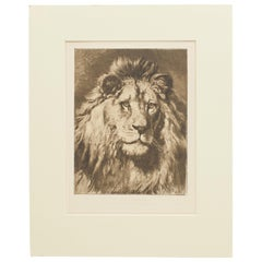 Lion Print by Herbert Dicksee, His Royal Highness