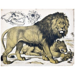 Lion, Vintage Wall Chart