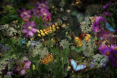 A Living Flash of Light, Photograph of Flowers, Insects, Birds in Purple, Green