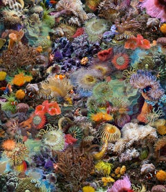 Actiniae.Seeanemonen, Multicolored Still Life Photograph of Coral, Fish, Sea