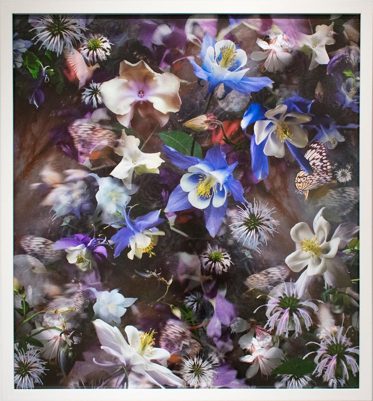 Columbine: The Mystery of Five (Abstracted Still Life Photo of Flowers) - Photograph by Lisa A. Frank