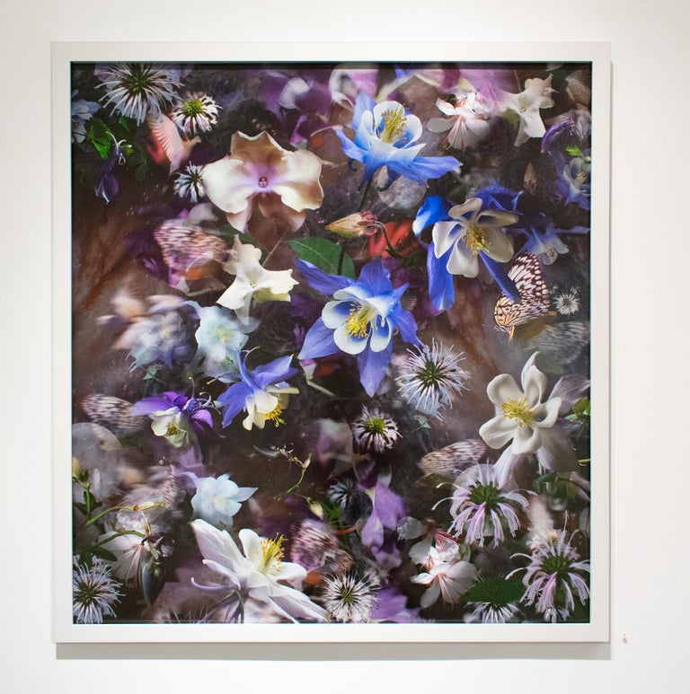 Columbine: The Mystery of Five (Abstracted Still Life Photo of Flowers) - Contemporary Photograph by Lisa A. Frank