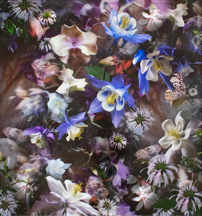 Lisa A. Frank Abstract Photograph - Columbine: The Mystery of Five (Abstracted Still Life Photo of Flowers)