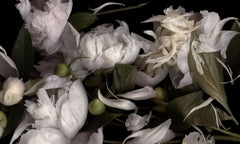 It's Not the Moon (Horizontal Still Life Photograph of White Peonies on Black)
